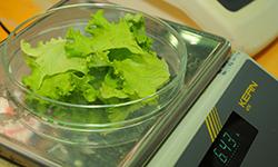 Foto: Investigadores defendem consumo de saladas-bebé para prevenir doenças