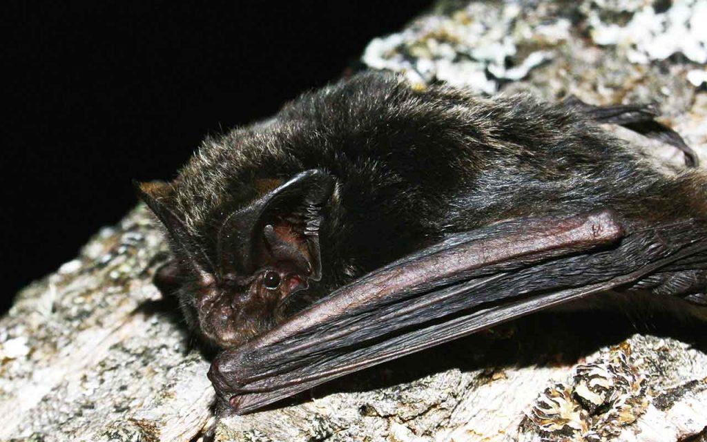 Foto: Morcego
