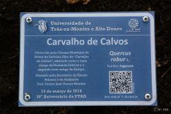 """Foto: Placa de identificação da Árvore """"filha"""" do Carvalho de Calvos plantada no Jardim Botânico da UTAD"""