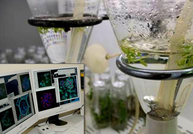 Foto: Campus UTAD Lab.s Ensaios - Genética e Biotecnologia