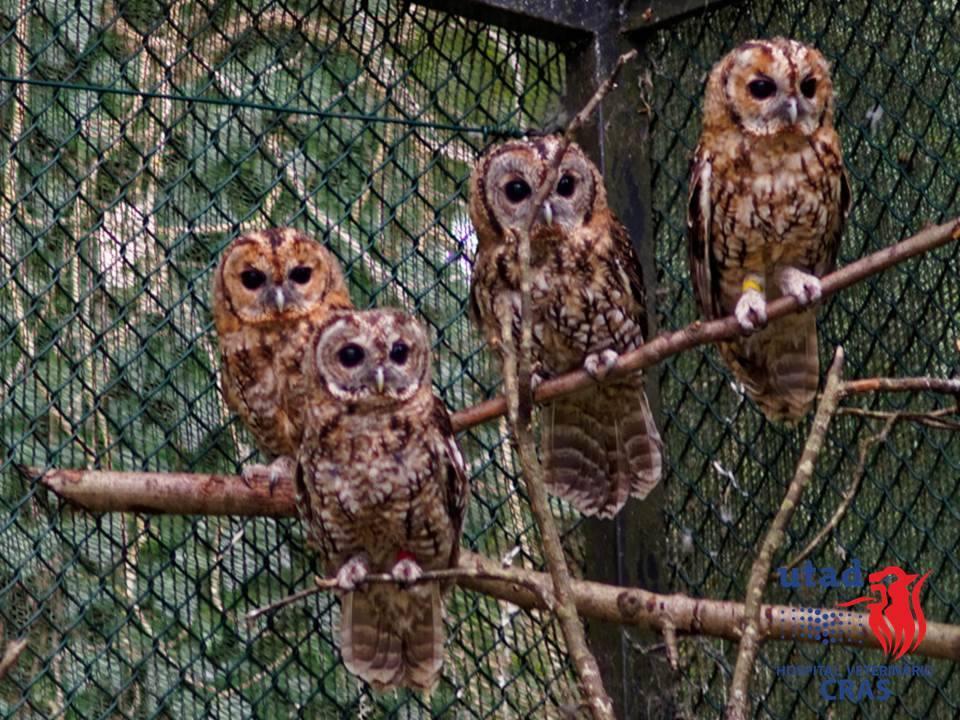 Foto: Recuperação de Animais Selvagens do Hospital Veterinário da UTAD