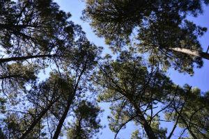 Foto: Florestas Portuguesas