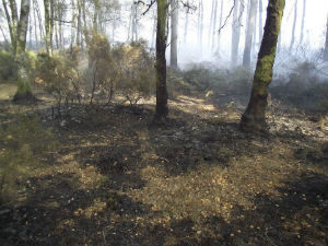 Foto: Bidoeiro o bombeiro da floresta