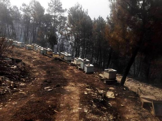 Foto: Colmeias destruídas pelo incêndio