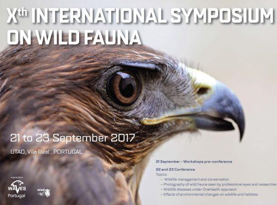 Cartaz: Fauna selvagem