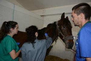 Foto: Clinicas Veterinárias
